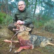 Cazar lobo