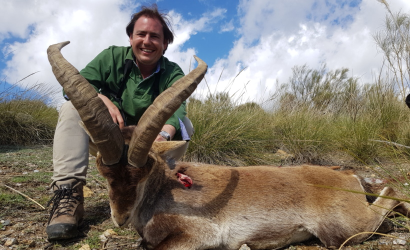 Ibex hunted in Spain