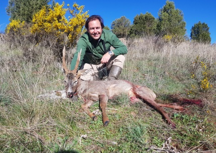 Roe deer Hunting in Spain